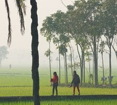 Dhaka, Bangladesh - February 19, 2014: Unidentified young Bangladeshi women walk by the rice field in misty morning in Dhaka, Bangladesh.