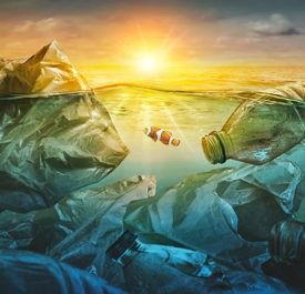 A clownfish swims among the plastic polluting the ocean.